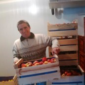 M. Augier weighs his apples