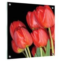 Printed clear acrylic panels, Wall Art & Image Displays