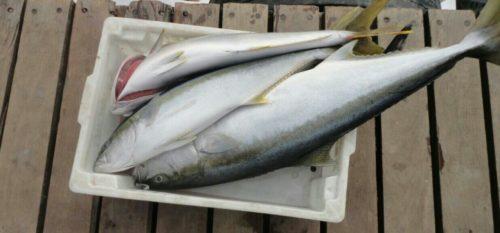 pescaria-mexilhoes-500x233