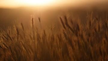 Poesía en Bardulias: Olvidar