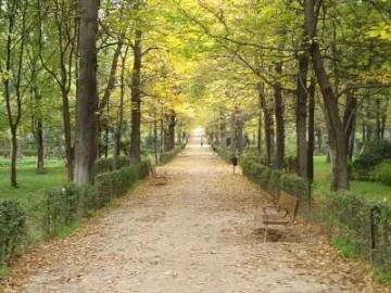 Relatos en Bardulias: Un café en el parque