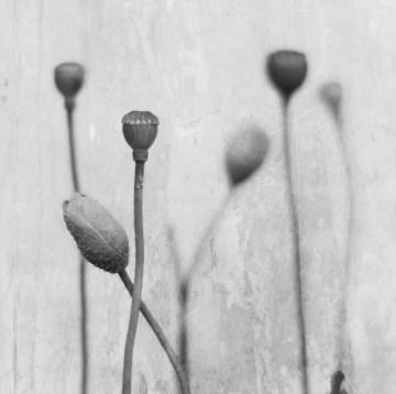 Poesía en Bardulias: Recordaréis I