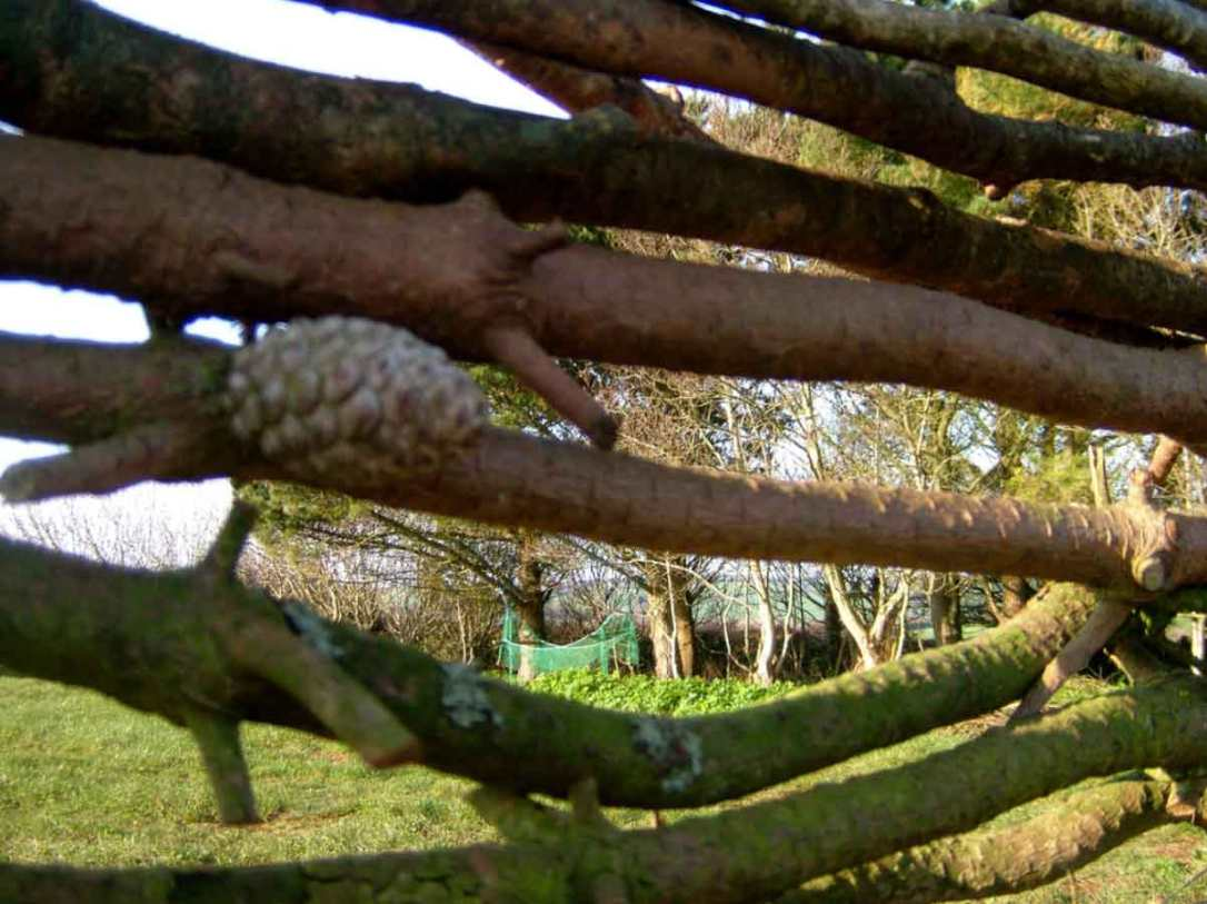 looking through the windbreak branches at the hammock in the woods at barefoot glamping cornwall