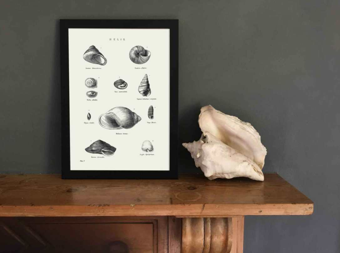 seashell art print in black frame