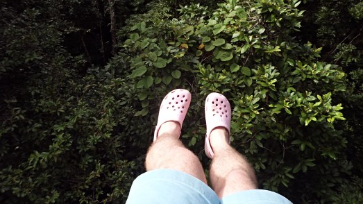 Crocs hanging up in the canopy - Daintree Rain Forest, Australia