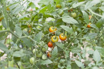 Garden6