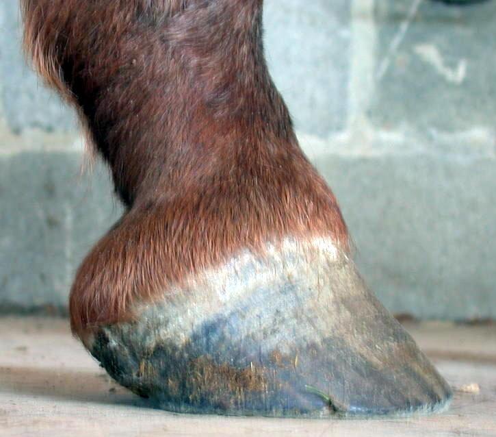 Case Studies Barefoot Hoofcare