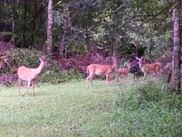 All_Barefoot_Justines_Deer