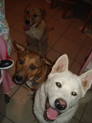 dogs-sheris.jpg
