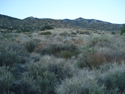 foothills2