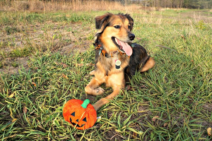 halloween-chewy-toy