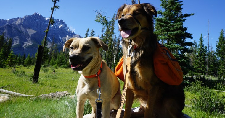 So You Want to Take Your Dog to Canada, Eh?