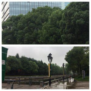 Grønne lunger, rett utenfor sentrum av Shanghai.
