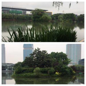 Grønne lunger i Shanghai