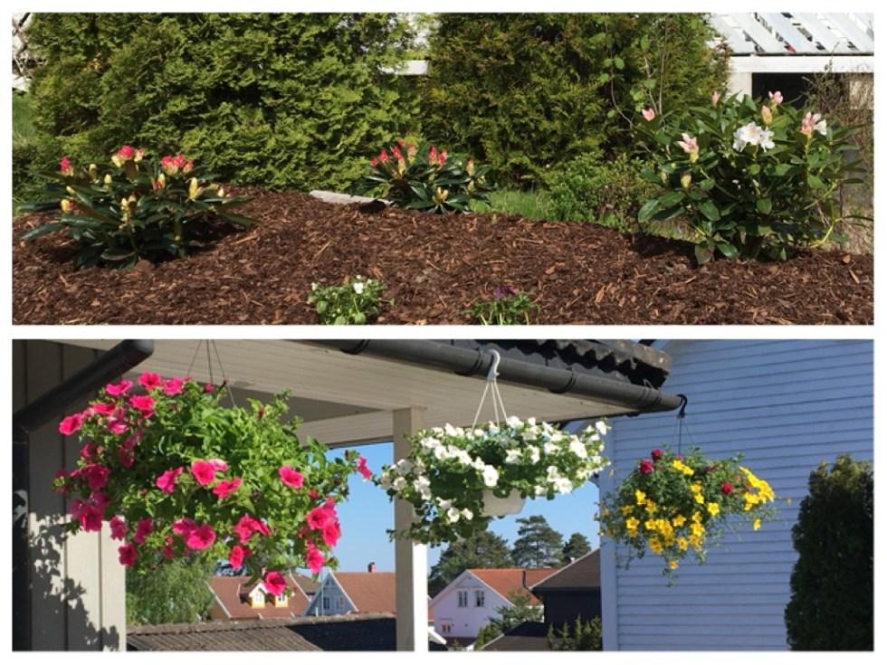 Blomster i hagen