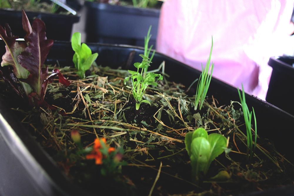 urban gardening 13