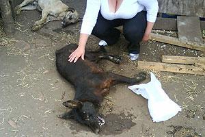 ESPAÑA: Los Musulmanes envenenan a los perros, ya que los consideran basura