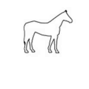 6 Pferd