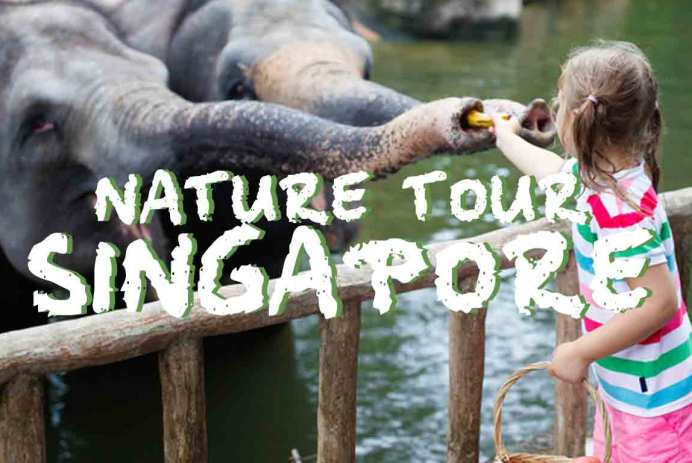 singapore-zoo-safari-tour