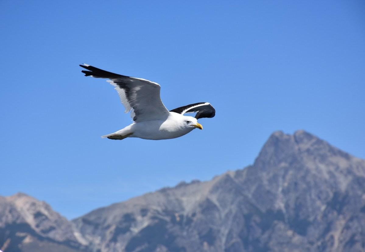 Primavera e verão: reserva de passeios em Bariloche, organize a sua!