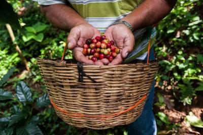 Cafe-Justo-Coffee-Chiapas-Mexico