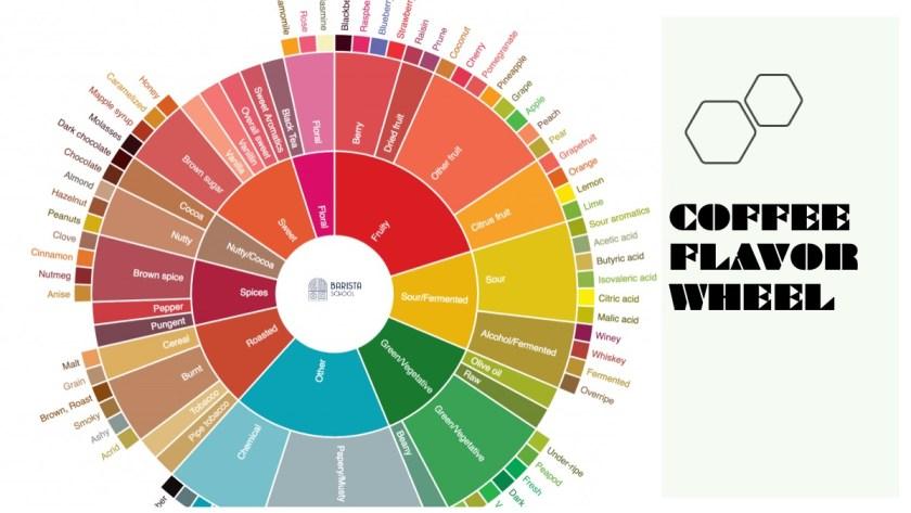 coffee flavor wheel mô tả hương vị cà phê