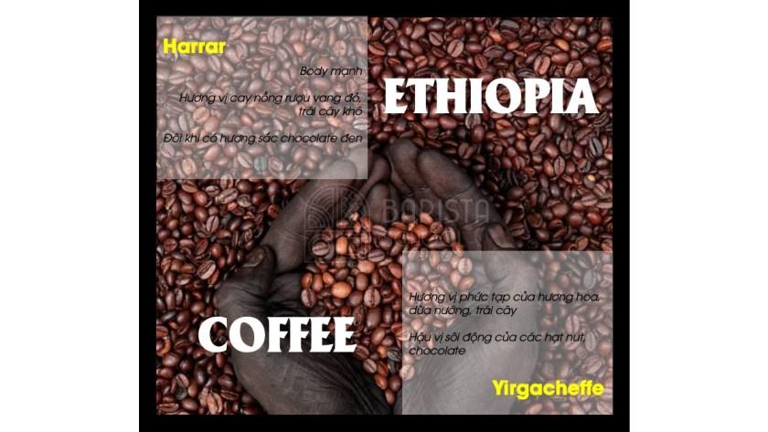 Ethiopia luôn là loại cà phê tuyệt vời
