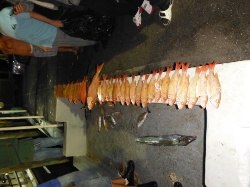 Best Drift Fishing Palm Beach