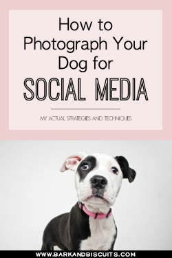 How to Photography Your Dog For Social Media