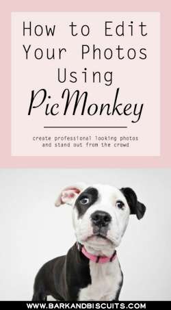 How to Edit Your Photos Using PicMonkey