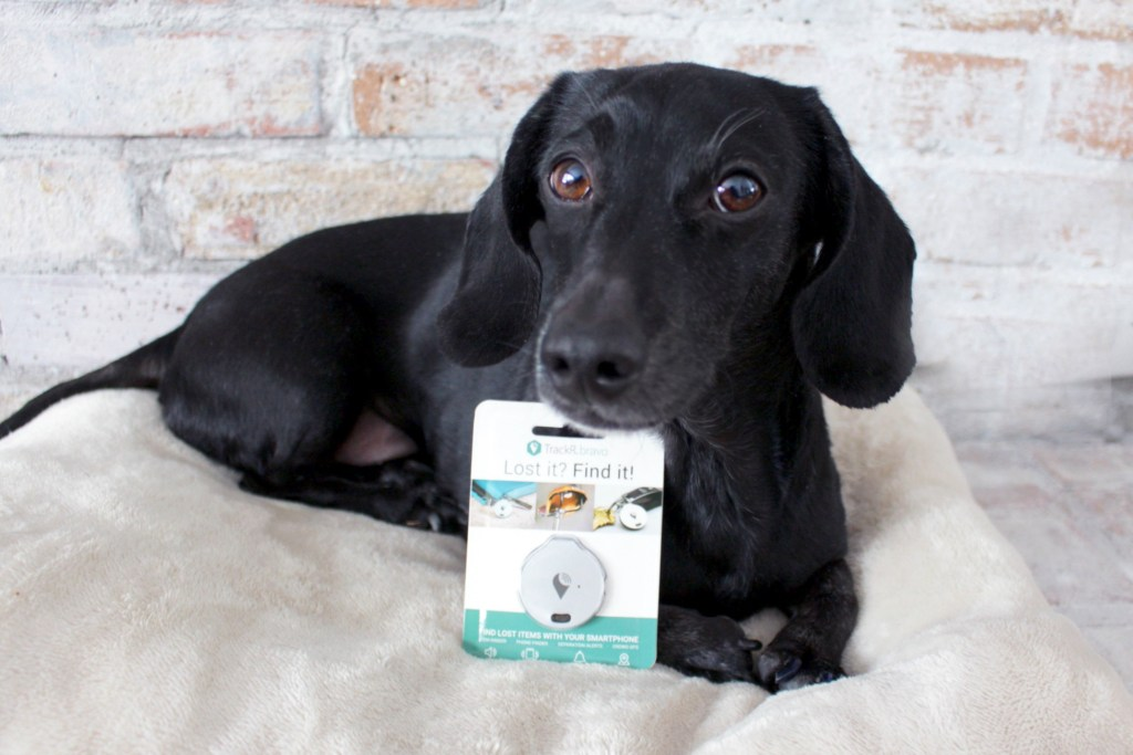 dachshund with trackR