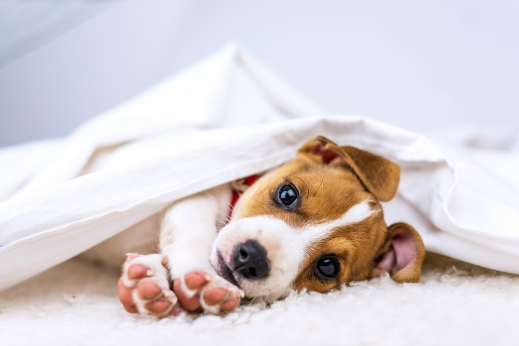 New Puppy Guide - How To Prepare BEFORE You Bring Your Puppy Home