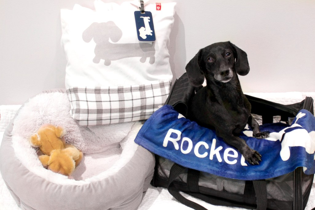 Packing Essentials For A Weekend Trip With Your Dog