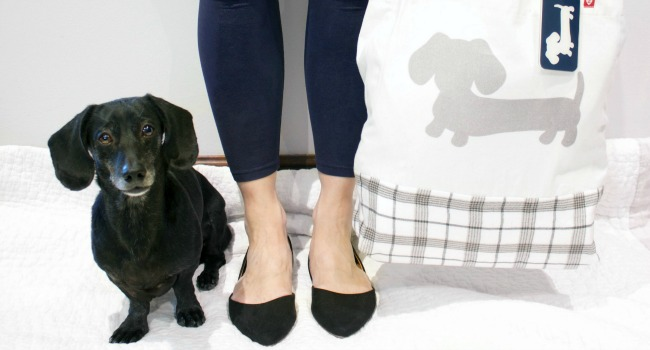 Packing Essentials for a Weekender With Your Dog