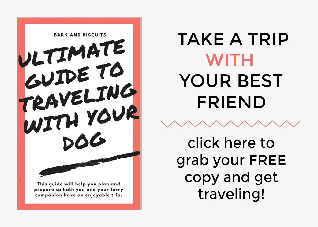 The Ultimate Guide To Traveling With Your Dog.
