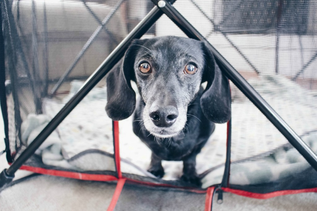 7 Reasons You Need A Portable Pet Pen For Your Dog