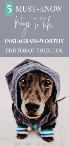 5 Ways To Take Instagram Photos Of Your Dog