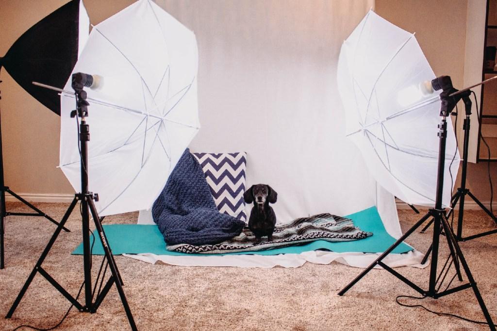 5 Ways to Take Instagram-Worthy Photos Of Your Dog