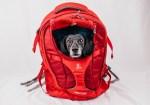 Kurgo G-Train Dog Carrier Backpack - Full Review