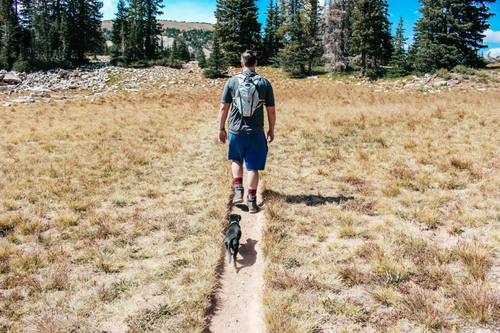 small dog hiking