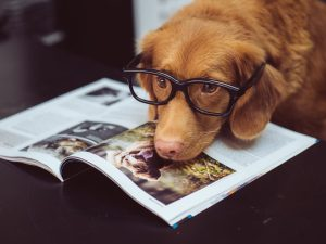 Can CBD Oil Treat Dog Cancer with CBD for pets, Can CBD Oil Treat Dog Cancer?