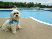 Fritz Pool-side in matching Harness