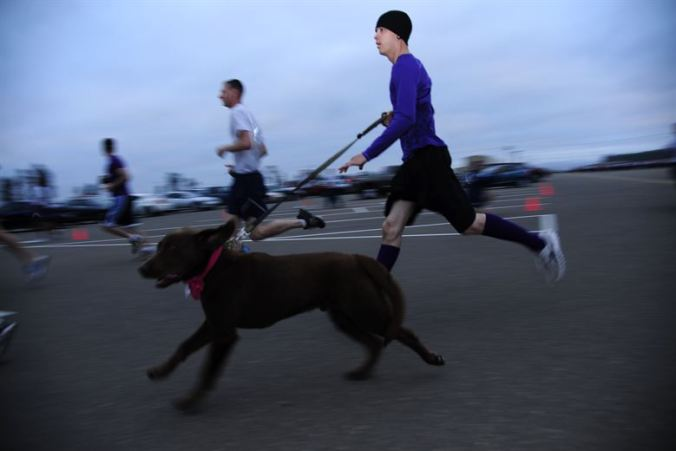 dog running with his owner on a leash