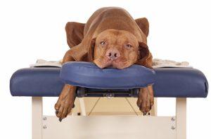 massage dog 2