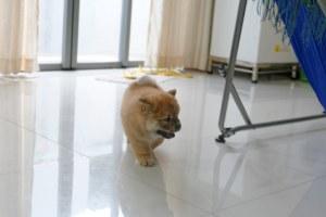 apartamento de ejercicios para perros
