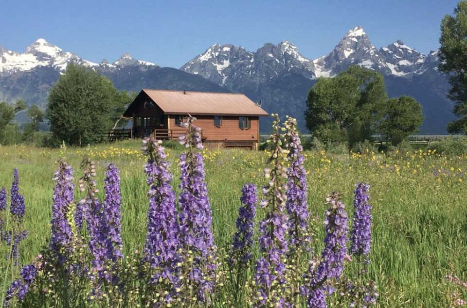 Grand Tetons and wild lupine flowers - McReynolds Cabins