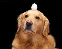 Can I Feed My Dog Eggs Everyday Bark How