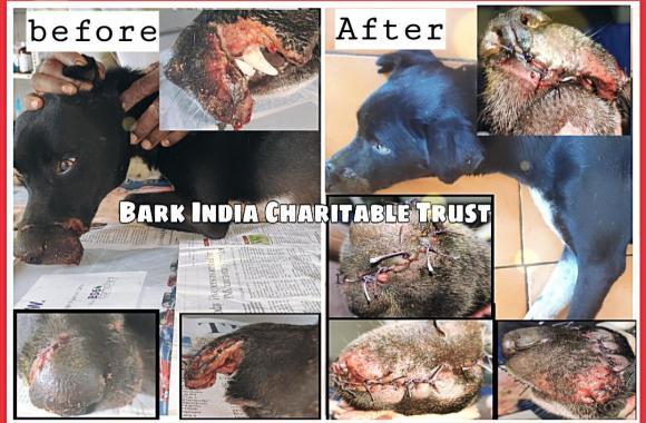 Street dog rescue from Navarkulam