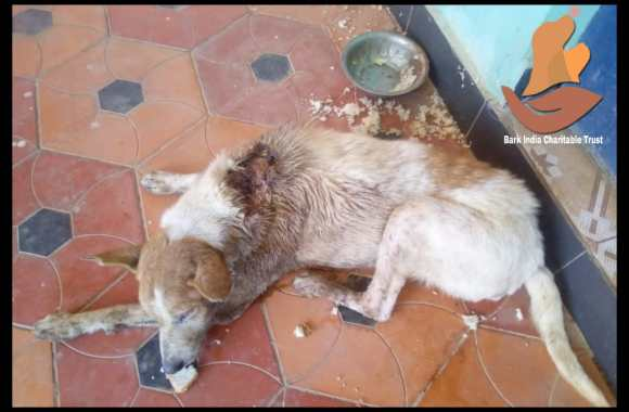 Wounded dog rescued- Stray dog rescue during COVID19