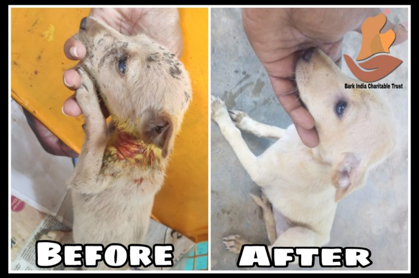 Puppy before and after treatment